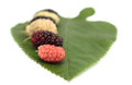 Mulberry on the green leaf background Stock Photography