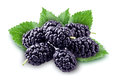Mulberry isolated. Group of berries Royalty Free Stock Photo