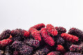 Mulberry isolated Royalty Free Stock Photo