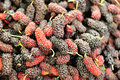 Mulberry market fresh selling at Royalty Free Stock Photos