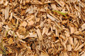 Mulch close-up Stock Images