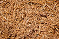 Mulch Wood chips Royalty Free Stock Photo