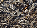 Mulched ground Stock Images