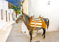 The mule typical beautiful narrow road with a in langada a vilage of amorgos island in greece Stock Photos