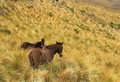 Mules in the mountain Stock Photo