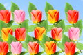 Multi color rose flower in sky background Royalty Free Stock Photo