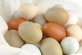 Multi colored chicken eggs Stock Photos