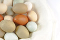 Multi colored chicken eggs Royalty Free Stock Image