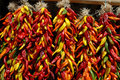 Multi colored chili ristras Royalty Free Stock Image