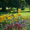 Multi colored flower bed Stock Photography