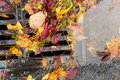 Multi colored leaves clogging a street drain Royalty Free Stock Photo