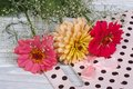 Multi colored zinnia flowers with gypsophila and gift bag on wooden board Stock Image