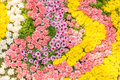 Multi-coloured of flowers Royalty Free Stock Photo