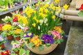 Multi coloured flowers at springtime Royalty Free Stock Photo