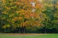 Multi-coloured trees Stock Image