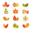 Multicolor autumn leaves flat vector icons. Fall feuille leaf collection