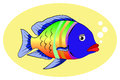 Multicolor fish Royalty Free Stock Photography