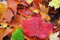 Multicolor forest floor red maple leaf on great nature background Stock Photography