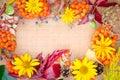 Multicolored Autumn Plant And ...