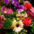 Multicolored blooming spring flower bouquet with red rose pink buttercup and white gerbera. Royalty Free Stock Photo