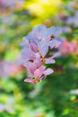 Multicolored blurry floral background, bokeh, lilac-blue leaves