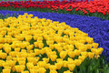 Multicolored flower bed Royalty Free Stock Photography