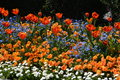 Multicolored flowerbed with vibrant colors Royalty Free Stock Image