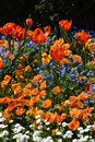 Multicolored flowerbed with vibrant colors Royalty Free Stock Photos