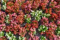 Multicolored flowers on flowerbed. Floral background Royalty Free Stock Photo