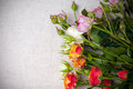 Multicolored roses on linen fabric Stock Photos