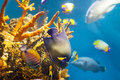 Multicolored tropical fish at coral reef in sea water Stock Photo