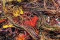 Multicolored wires