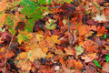 Multicolors fallen autumn leaves in sunny day on ground Royalty Free Stock Photo