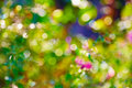 Multicolour bokeh abstract bright background Royalty Free Stock Images