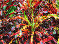 Multicoloured foliage red green yellow and purple Stock Images