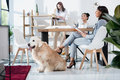 Multiethnic women in formal wear working at office with dog Royalty Free Stock Photo
