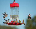 Multiple hummingbirds at feeder some eating nectar some hovering waiting their turn Royalty Free Stock Image