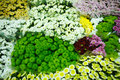 Multitude of color flowers at the wholesale market Stock Photo