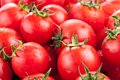 Multitude of ripe tomatoes clise up Royalty Free Stock Image