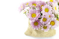 Mum flower color purple bag sackcloth Royalty Free Stock Photography
