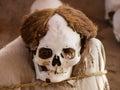 Mummy in chauchilla archeological site near nazca peru Stock Photo