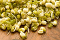 Mung bean germinated sprouts Stock Photography