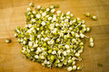 Mung bean germinated sprouts Stock Image