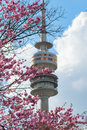 Munich Radio-TV tower framed by spring blooming pink flowers Royalty Free Stock Photo