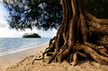 Muri lagoon in rarotonga cook islands an old tree trunk on the beach of Stock Image