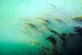 Murky ocean water and sea grass Royalty Free Stock Photo