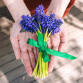 Muscari bouquet bouquest of grape hyacinths on wood Stock Image