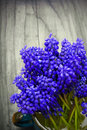 Muscari bouquet on a dark wooden table Stock Image