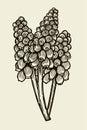 Muscari flowers card Royalty Free Stock Photo