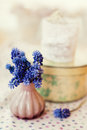 Muscari flowers in small pink vase Stock Photos